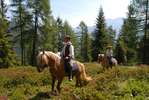 Horses, Nature, Sarentino Valley